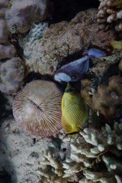 ikan-mati